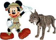 Mickey meets Iberian Lynx