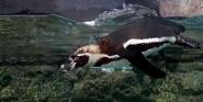 Milwaukee County Zoo Penguin