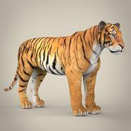 Model Bengal Tiger