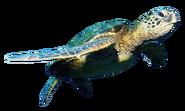 NatureRules1 Sea Turtle