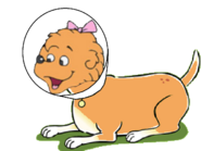 Sister as a Dog Wears a Cone
