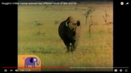 That's a Rhinoceros