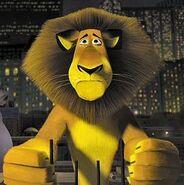 Alex-the-Lion-alex-the-lion-24491269-269-270