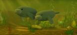 Amazon manatees