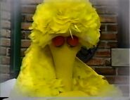Big Bird falls back asleep in the morning