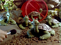 Creature Comforts Turtle.png