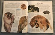 DK Encyclopedia Of Animals (109)
