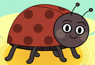 Ladybug in turn and learn