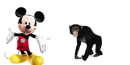 Mickey meets Common Chimpanzee