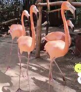 Ryan's World American Flamingos