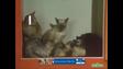 Sesame Street Cats