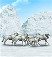 ZT-ArcticWolf