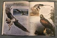 Birds (Eye Wonder) (5)