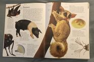 DK Encyclopedia Of Animals (4)
