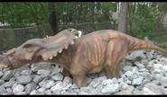 Dinosaurs Alive! Pachyrhinosaurus