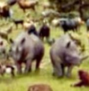 Evan Almighty Rhinos