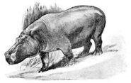 Malagasy-hippopotamus-5bdea4be-2be7-4929-a766-82297409bde-resize-750