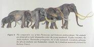 Mammothsized Mammals