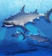 ZT-Tiger Shark