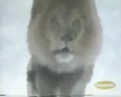Animorphs Lion
