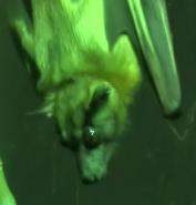 Cleveland Metroparks Zoo Bat
