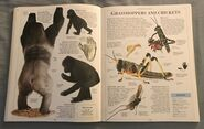 DK Encyclopedia Of Animals (87)