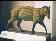 Eohippus model