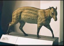 Eohippus model.png