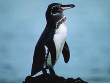 G-penguin img01-l.jpg