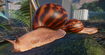 Snail, Giant Tiger Land (Planet Zoo)