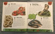 Snake Dictionary (14)