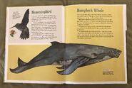 The Dictionary of Ordinary Extraordinary Animals (21)