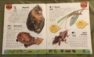 Weird Animals Dictionary (13)