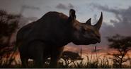 TLK 2019 Black Rhino