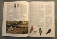The Kingfisher Illustrated Encyclopedia of Animals (43)