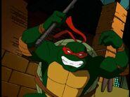 2509189-turtle393