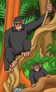 BTKB Chimps