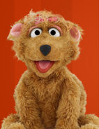 Curly-bear1