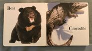 James Balog's Animals A to Z (2)