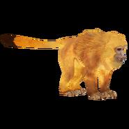 LionTamarin