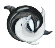 Orca Dolphin Yin Yang