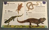 Reptiles and Amphibians Dictionary (24)