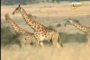 Scout's Safari Giraffe