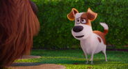 Secret-life-pets-disneyscreencaps.com-7843