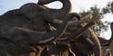 The Lion King 2019 Elephants