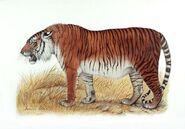 Tiger, Caspian