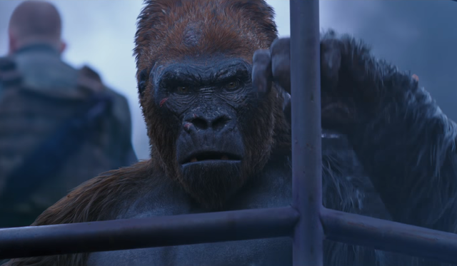 Red (Planet of the Apes)