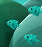 Blue Green Chromis