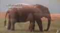 Elephant and Manatee