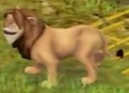 Lion Safari Adventures